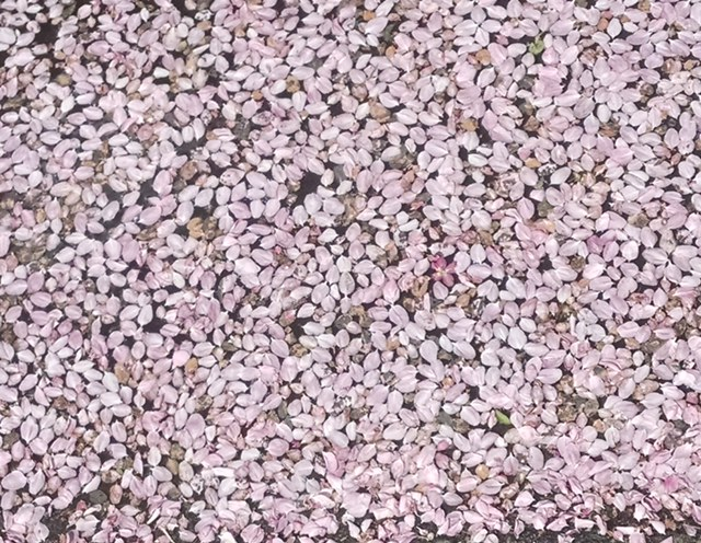 petals in puddle
